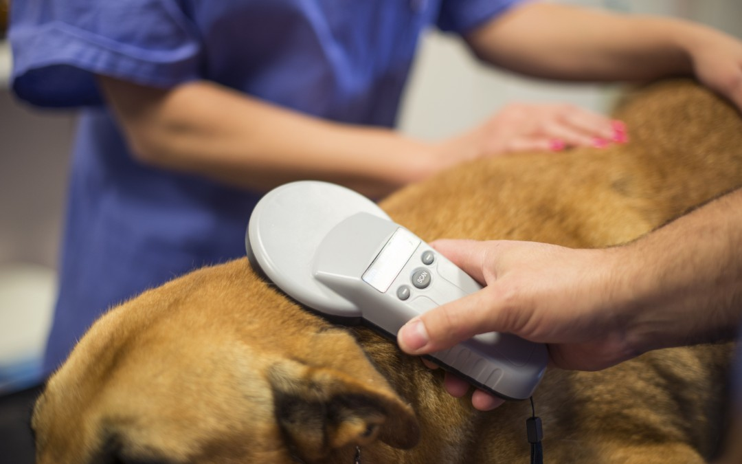 Veterinarians | Microchipping