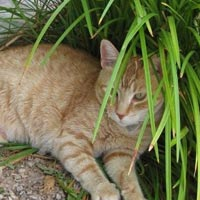 gilbert animal clinic - cat lying down in greens