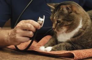 veterinarian gilbert