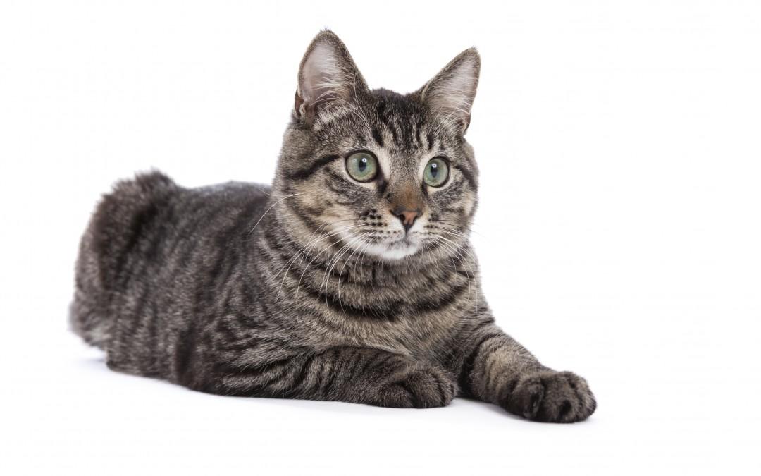 Cat Declaw   Best Option