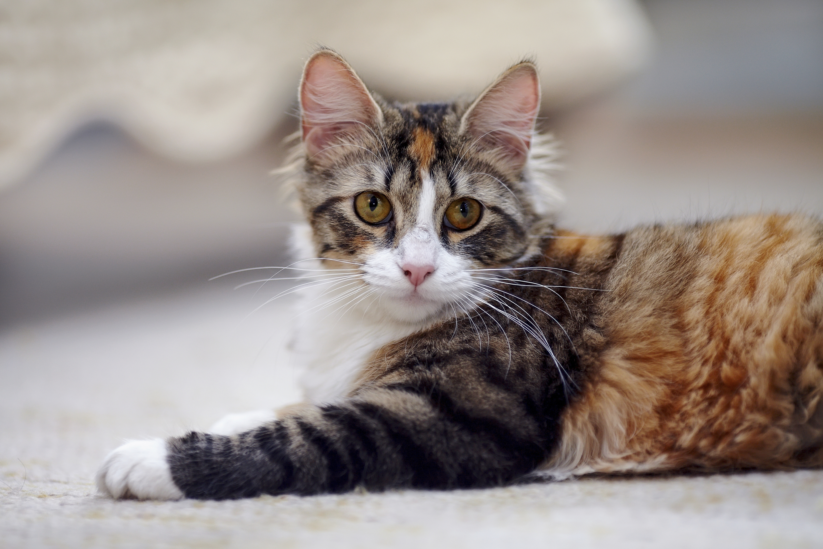 Cat And Dog Wellness Center Yelp