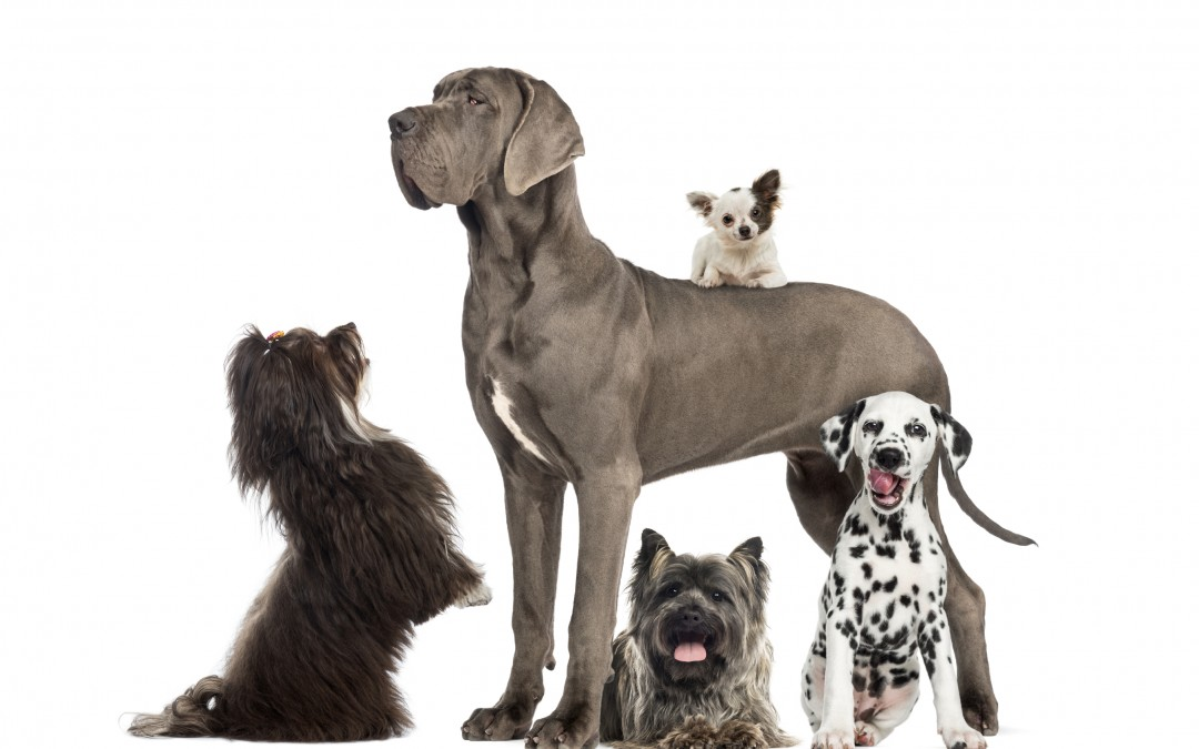 Keeping Ticks Off of Your Pets