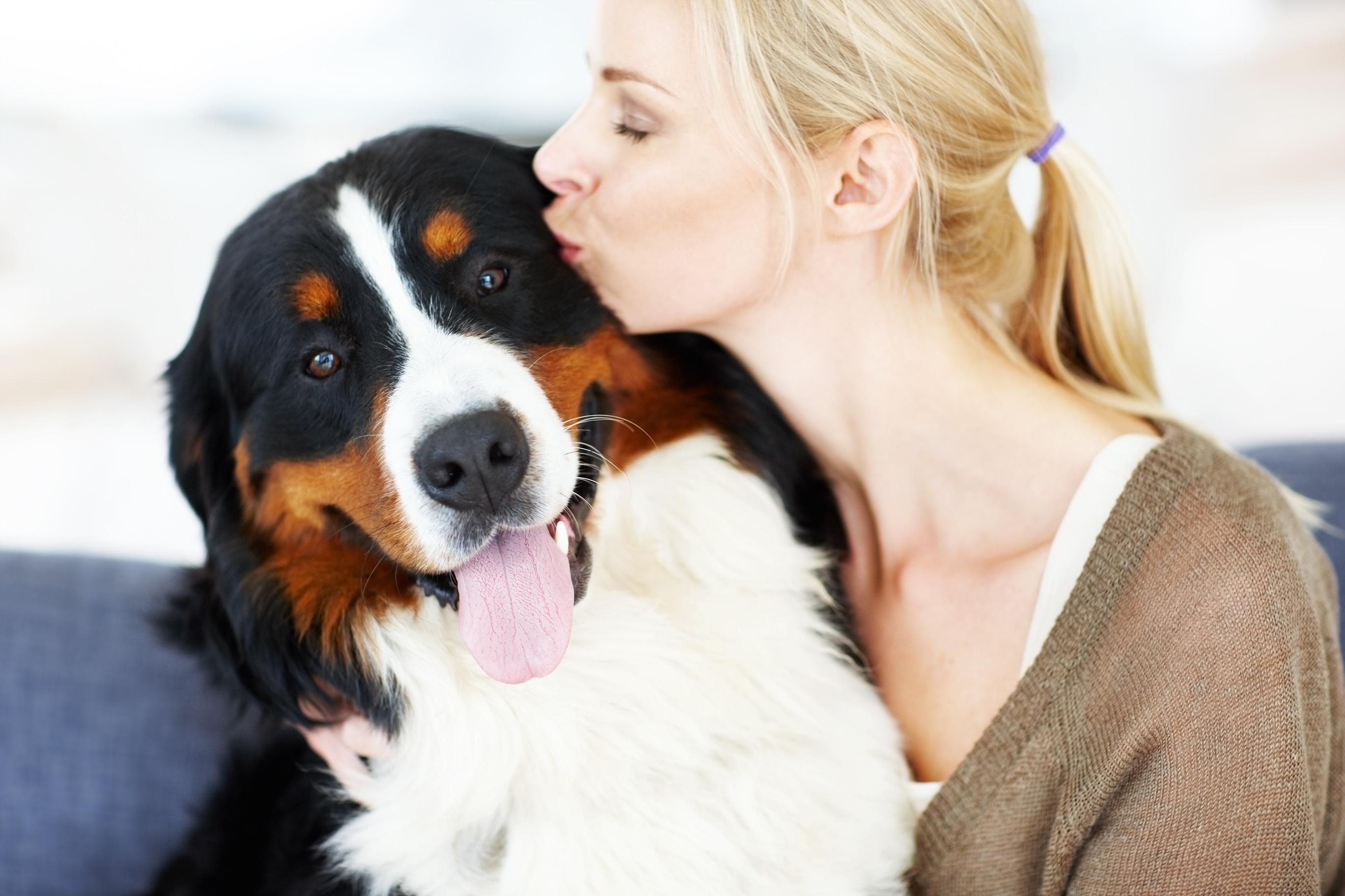 dog with rabies - HD2738×1825