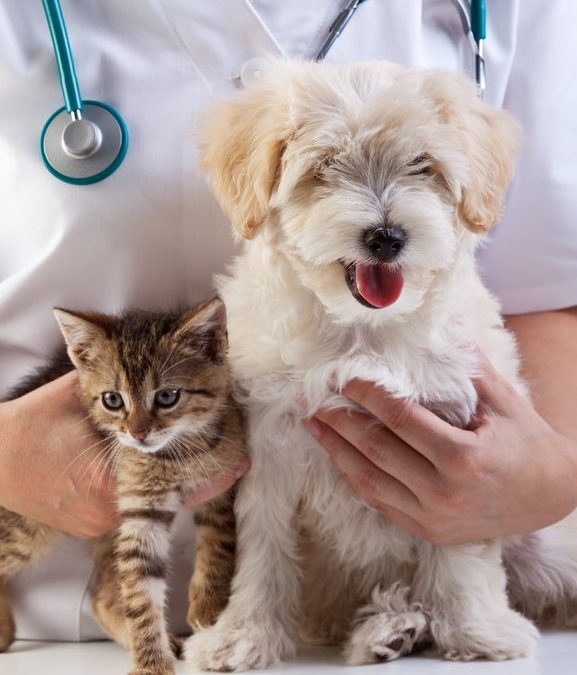 Pet care, prevention, clinic - vet checking a dog's heartbeat