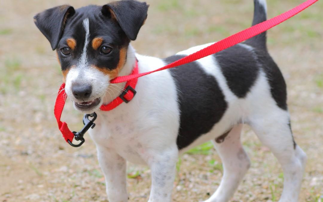 Veterinary Clinic | Keeping Fido Safe