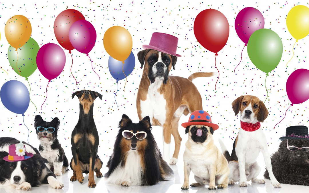 Pet Health   National Dog Day