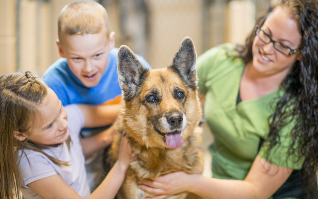 Best Vets In Gilbert | Adopt A Shelter Dog
