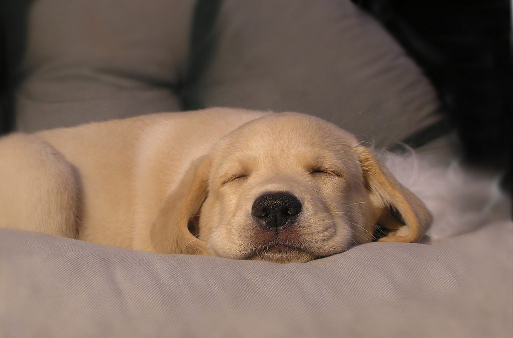 Most Luxurious Pet Spas