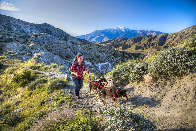 Dog-Friendly Trail Hikes in the Metro-Phoenix Area