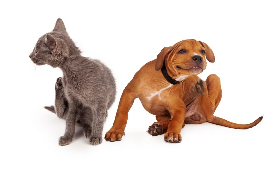 Protecting Your Pets From Fleas & Ticks