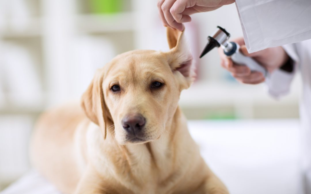 The Importance Of Pet Checkups