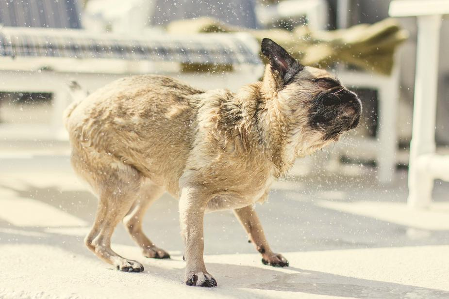 Keep Your Dog Cool In The Arizona Summer