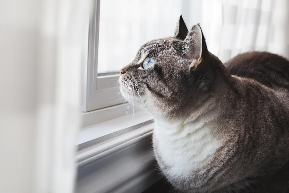 Choosing the Right Litter for Your Cat's Litter Box