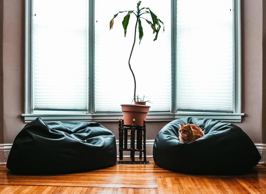 10 Pet-Friendly House Plants to Decorate Your Gilbert Home