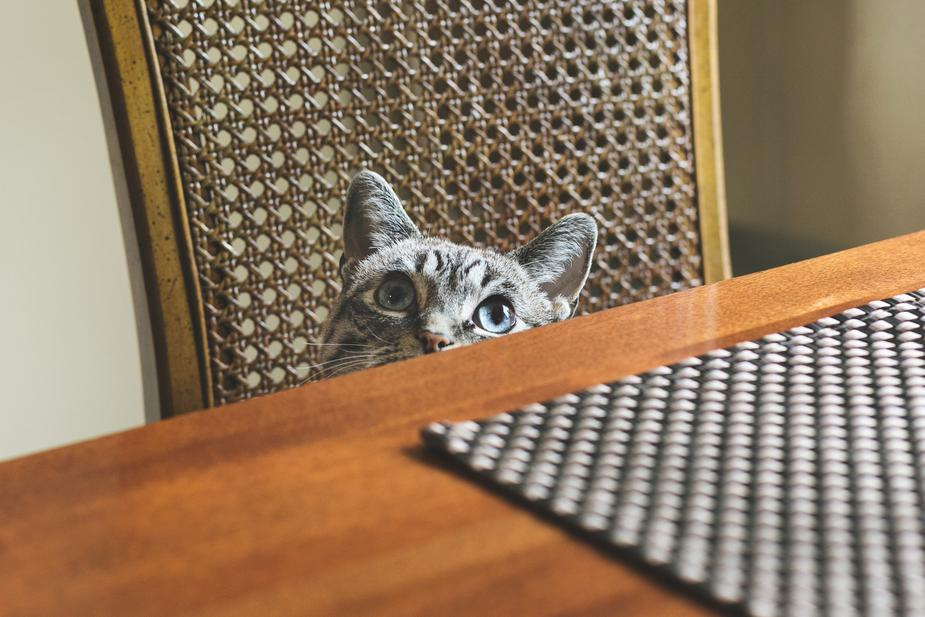 Are You Practicing Proper Pet Care Hygiene?