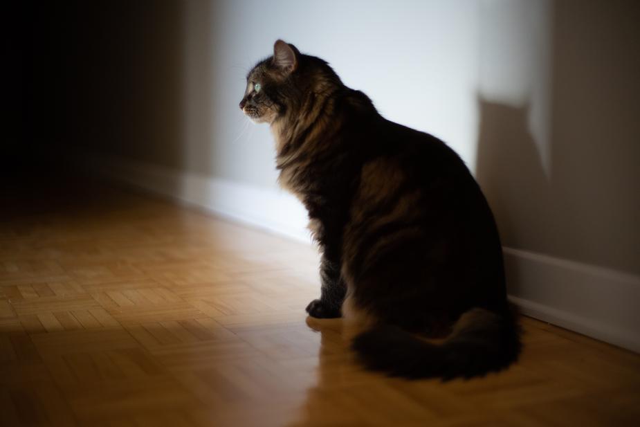 Proper Cat Litter Box Maintenance