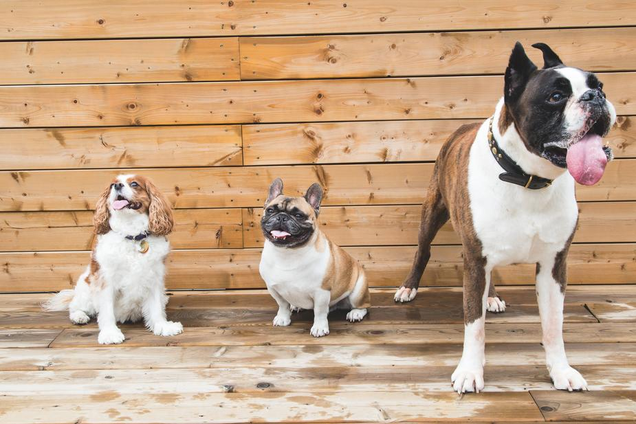 Most Luxurious Pet Resorts in the U.S.