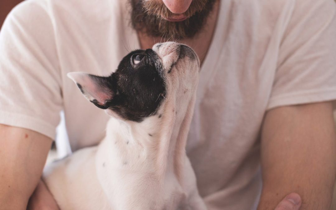The Many Health Benefits of Owning a Pet
