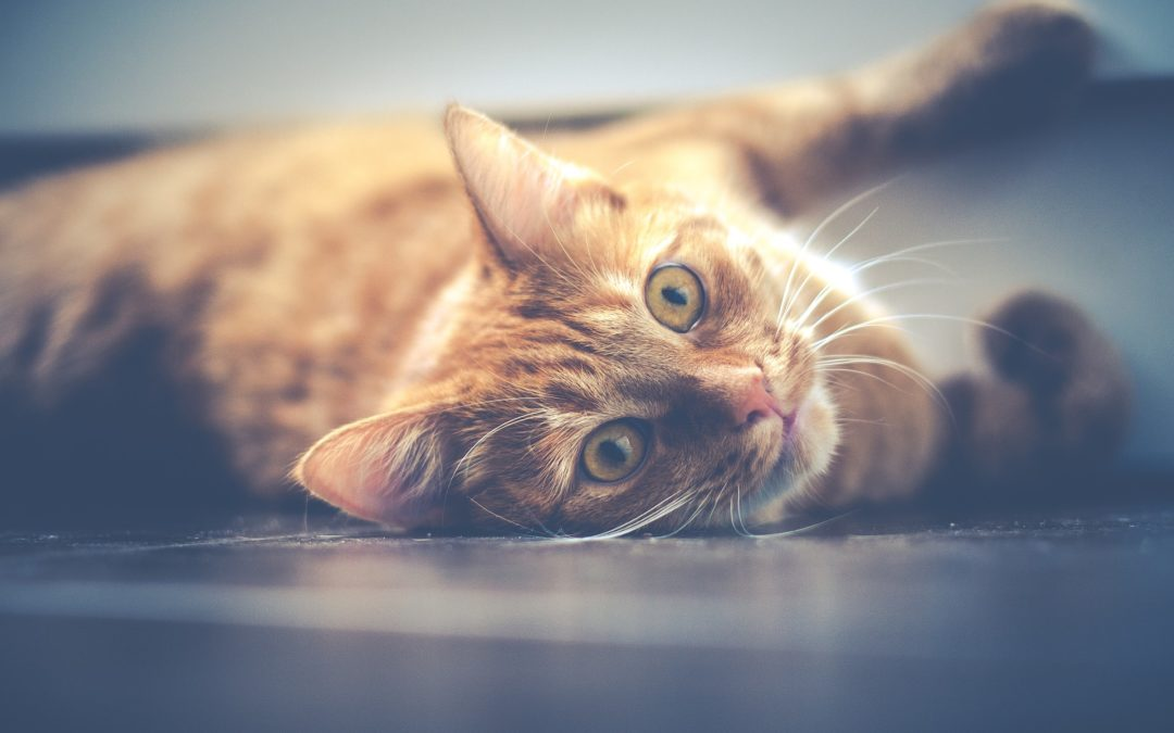 Reasons Your Cat May Be Urinating Outside the Litter Box