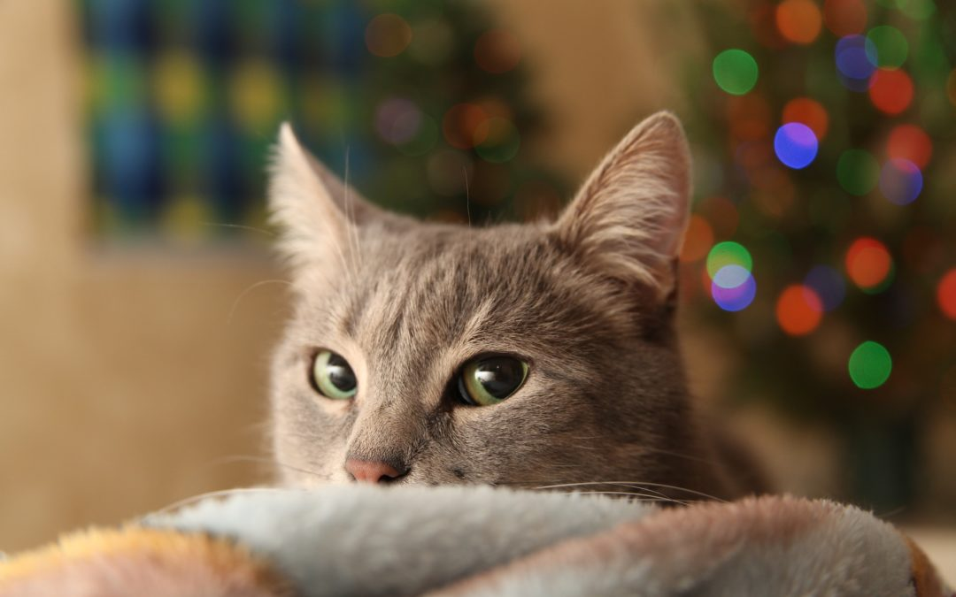 Keeping Pets Healthy over the Holidays, Part 2