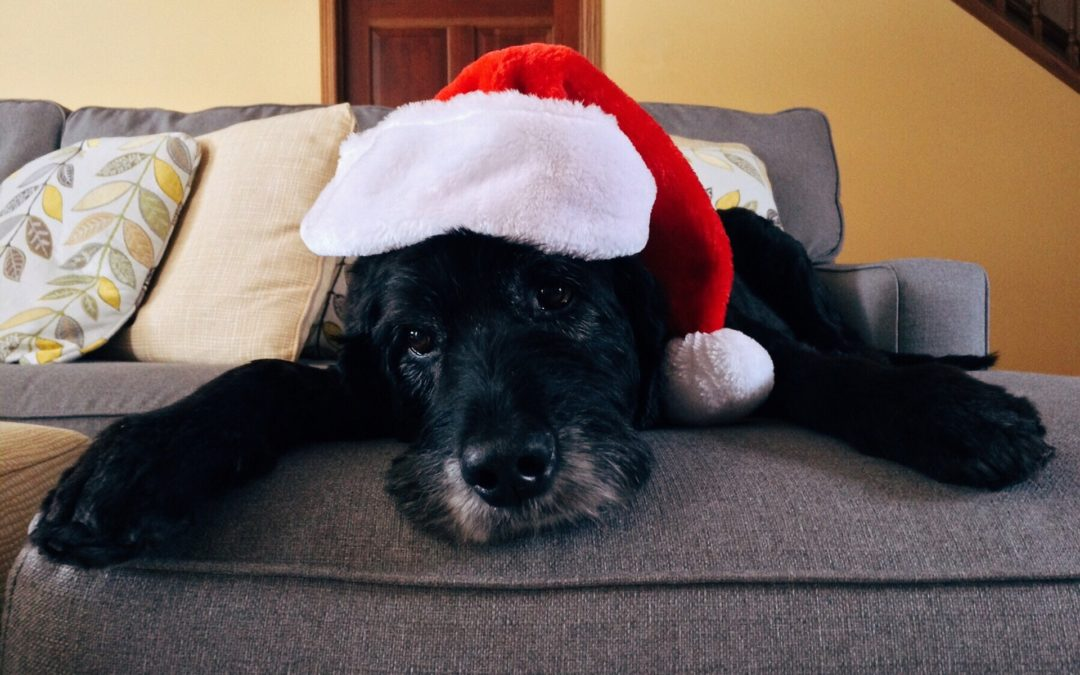 Keeping Pets Healthy over the Holidays, Part 1