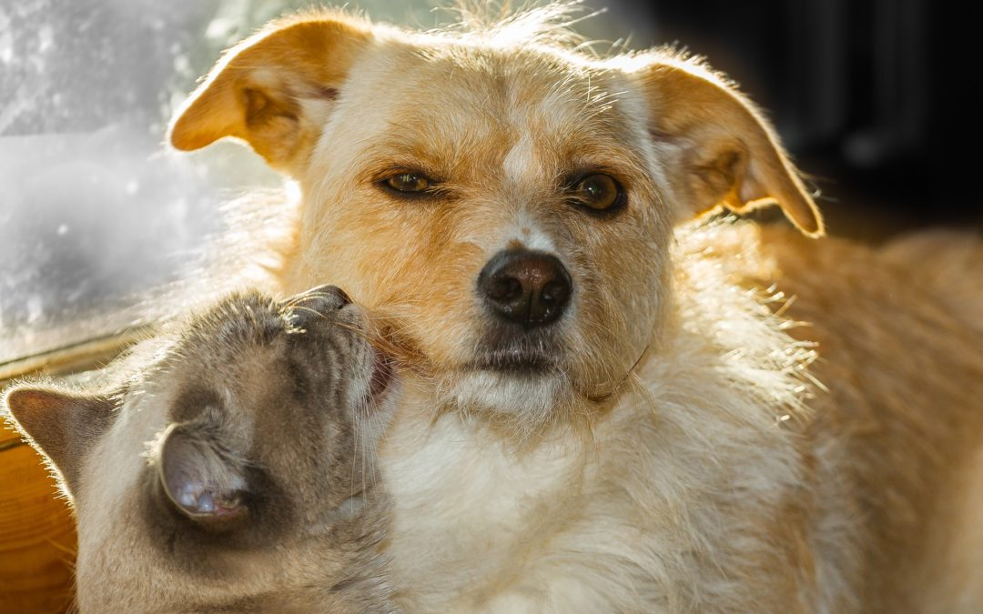 cat kissing dog- adopt a shelter pet in gilbert