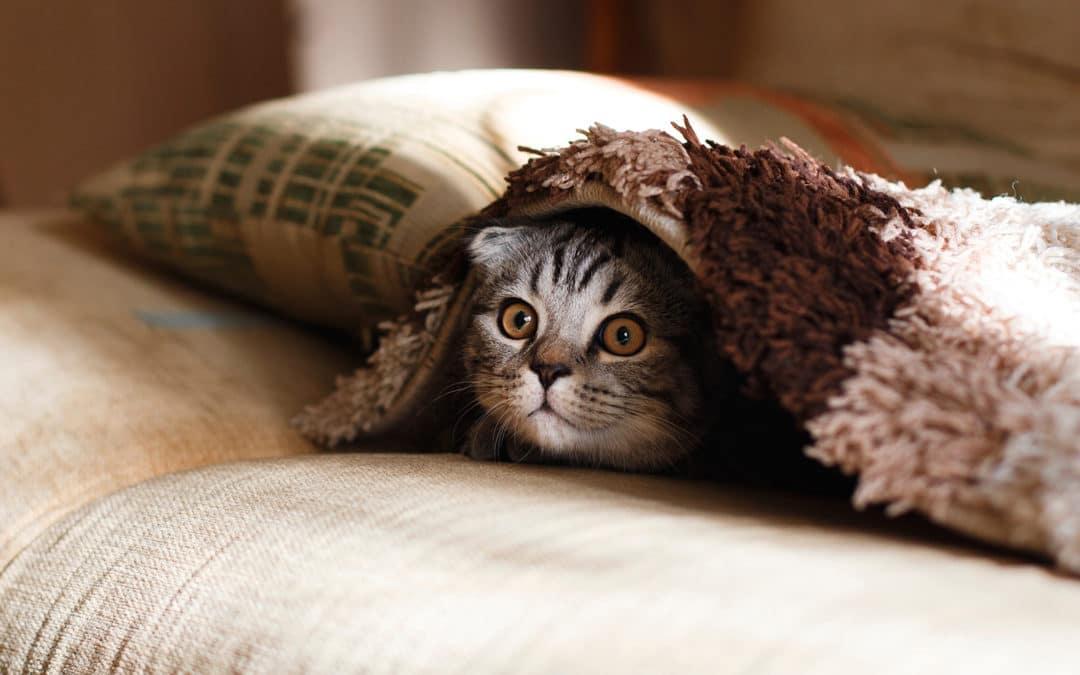 Why Do Cats Go Cuckoo for Catnip?