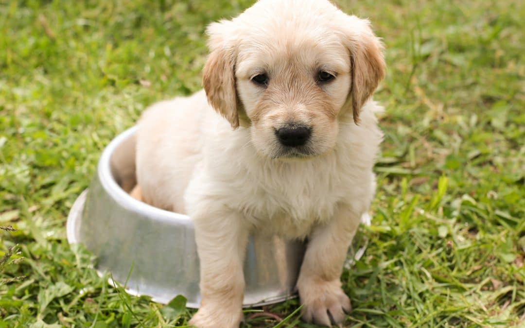 5 Ways To Keep Your Puppy Entertained