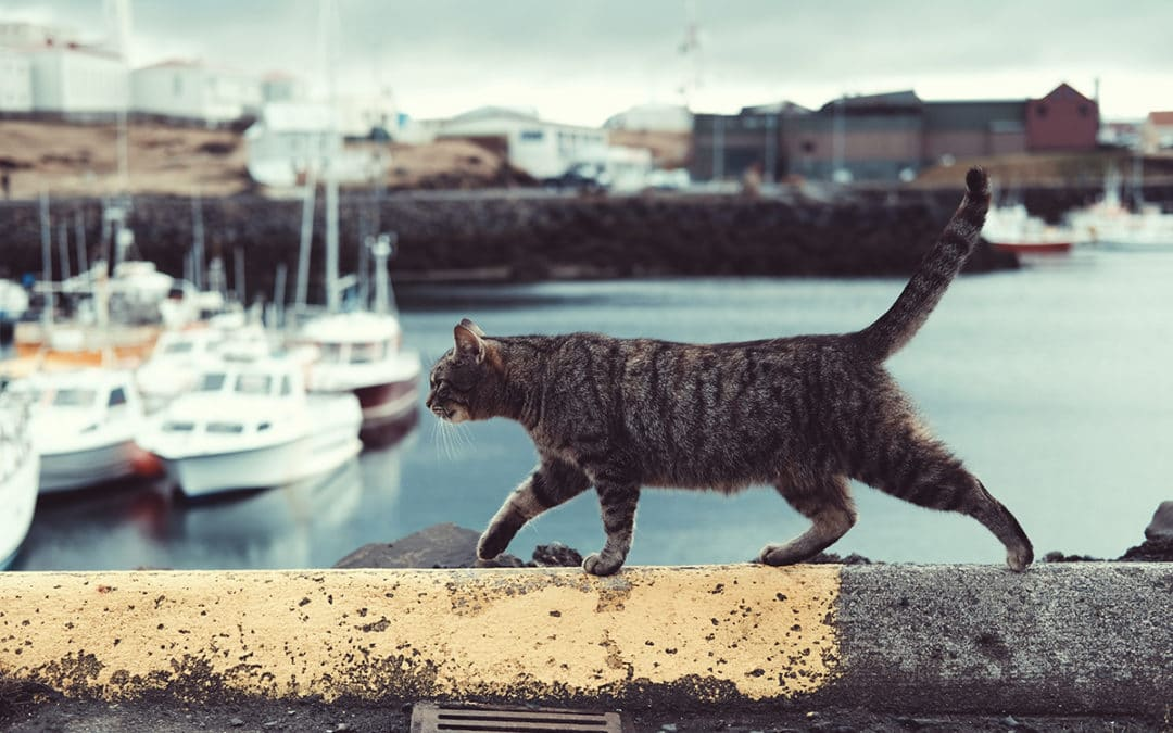 Cat-lovers' Vacation Destinations