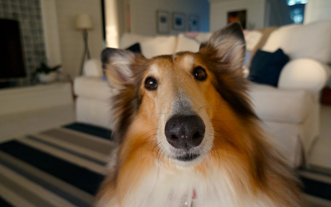 Indoor Exercises for Dogs
