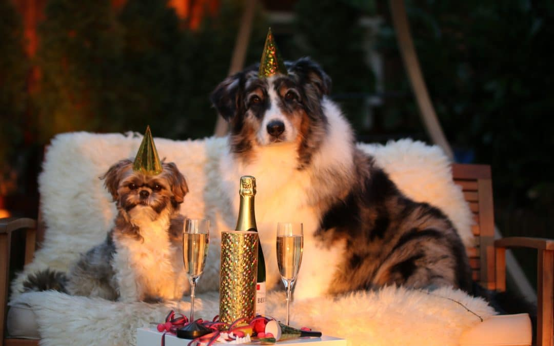 6 New Year's Resolutions For Your Dog's Health