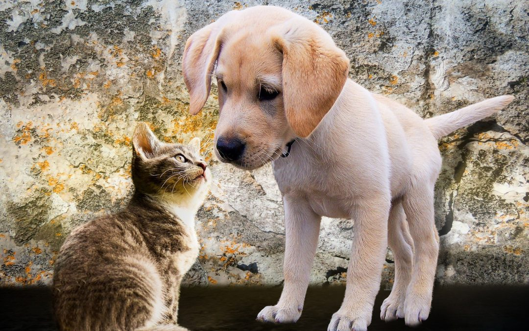 puppy and kitten - spaying and neutering