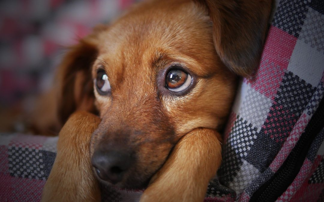 Dog Anxiety Awareness: How to Help