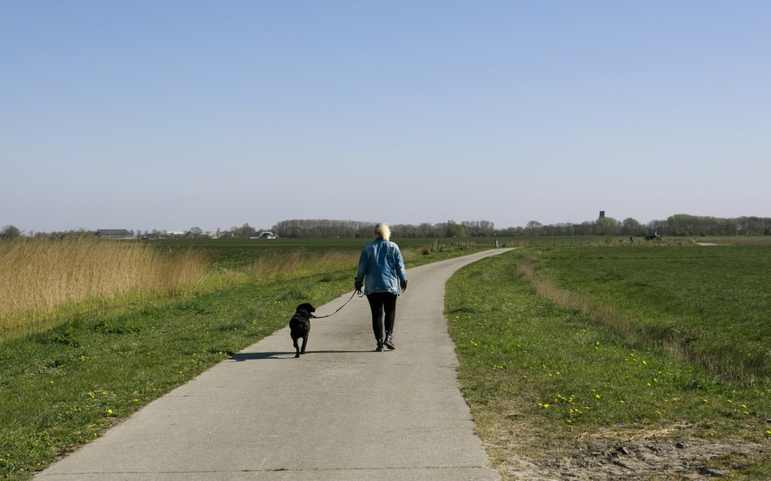 5 Socially-Distanced Pet Activities for Spring