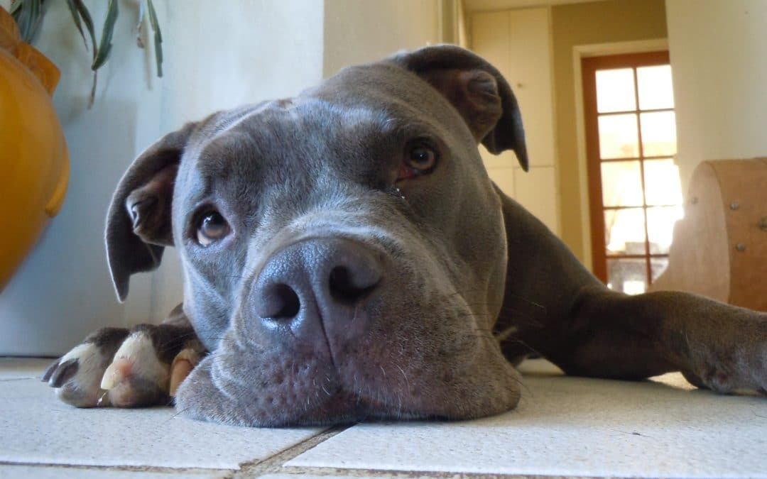 Separation Anxiety in Pets During Quarantine