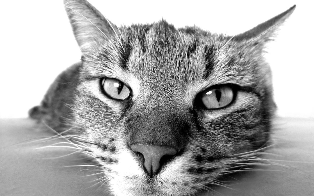 6 Subtle Signs Your Cat May Need to Visit the Vet
