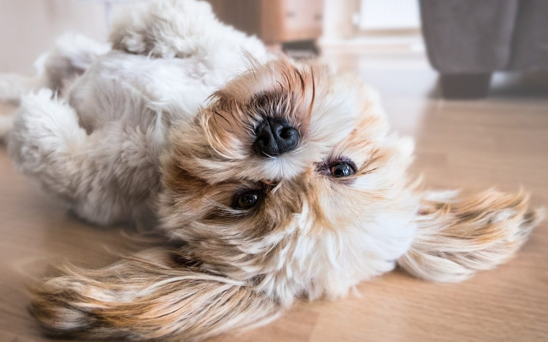 5 Fascinating Facts about Dogs