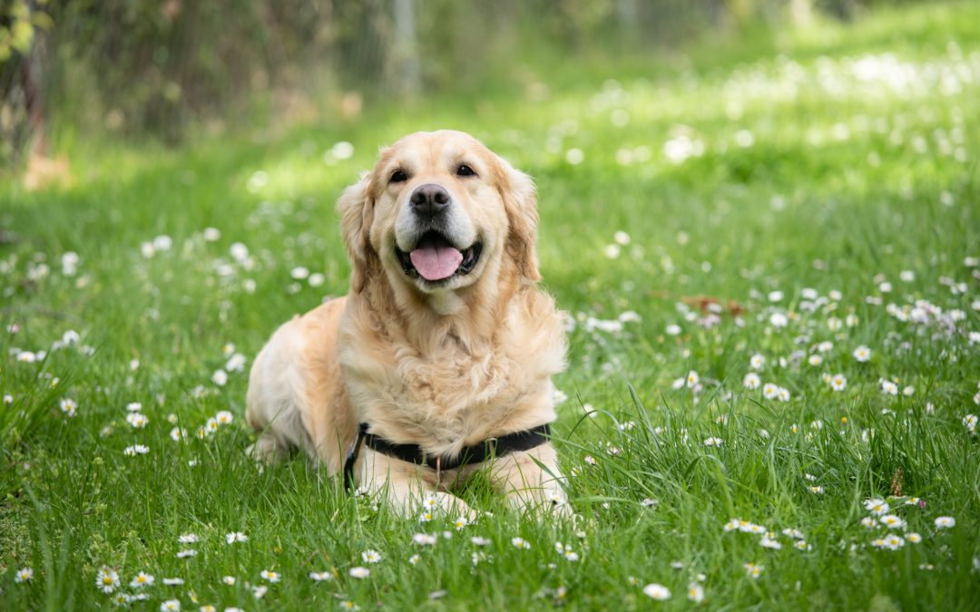 Is Your Dog Overweight? Signs of Obesity in Dogs
