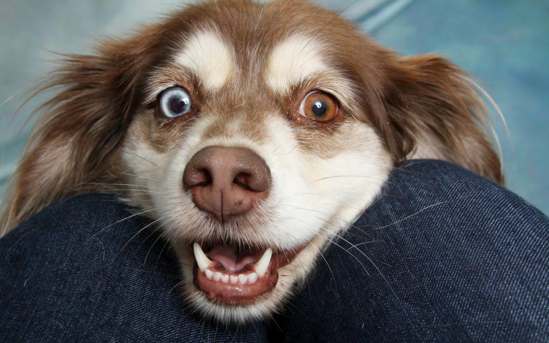 Gum Disease in Dogs