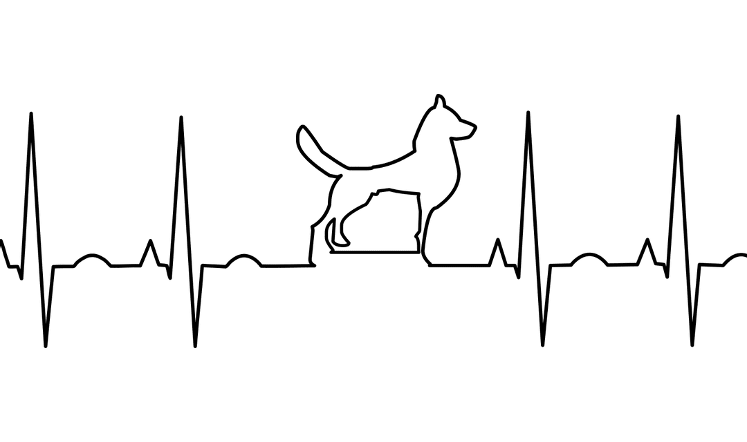 5 Tips to Keep Your Dog's Heart Healthy