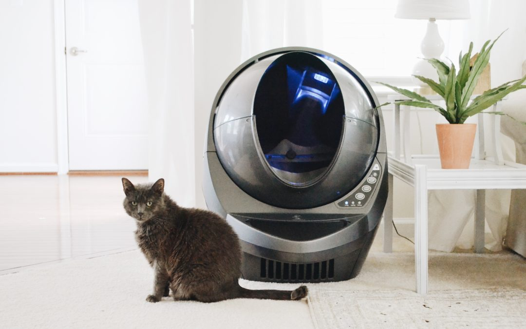 5 Reasons Your Cat Stopped Using the Litter Box
