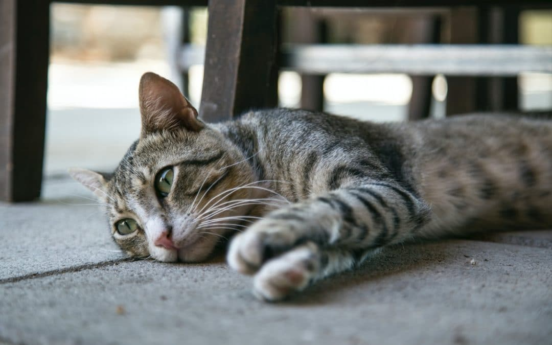 Lily Toxicity in Cats is a Concern in Springtime