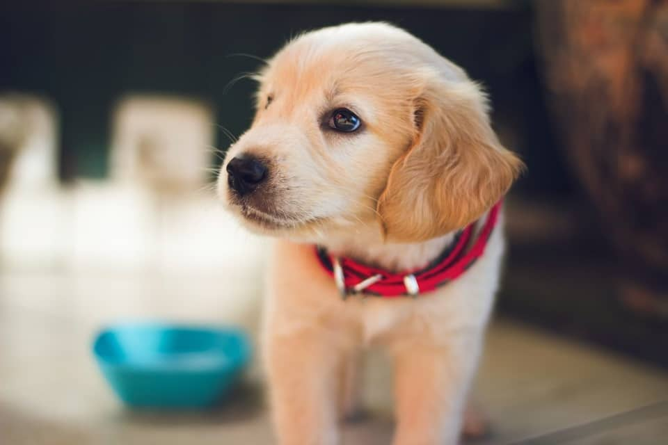Is Microchipping Your Pets Safe?