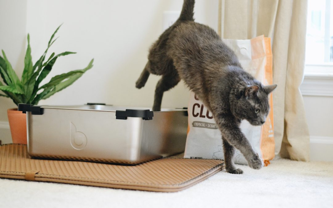 What Are the Health Risks of a Dirty Litter Box?