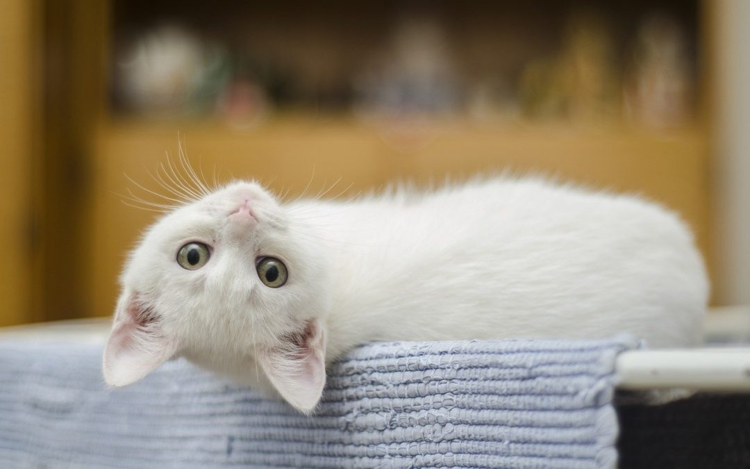 Four Tips for Bringing a Kitten Home