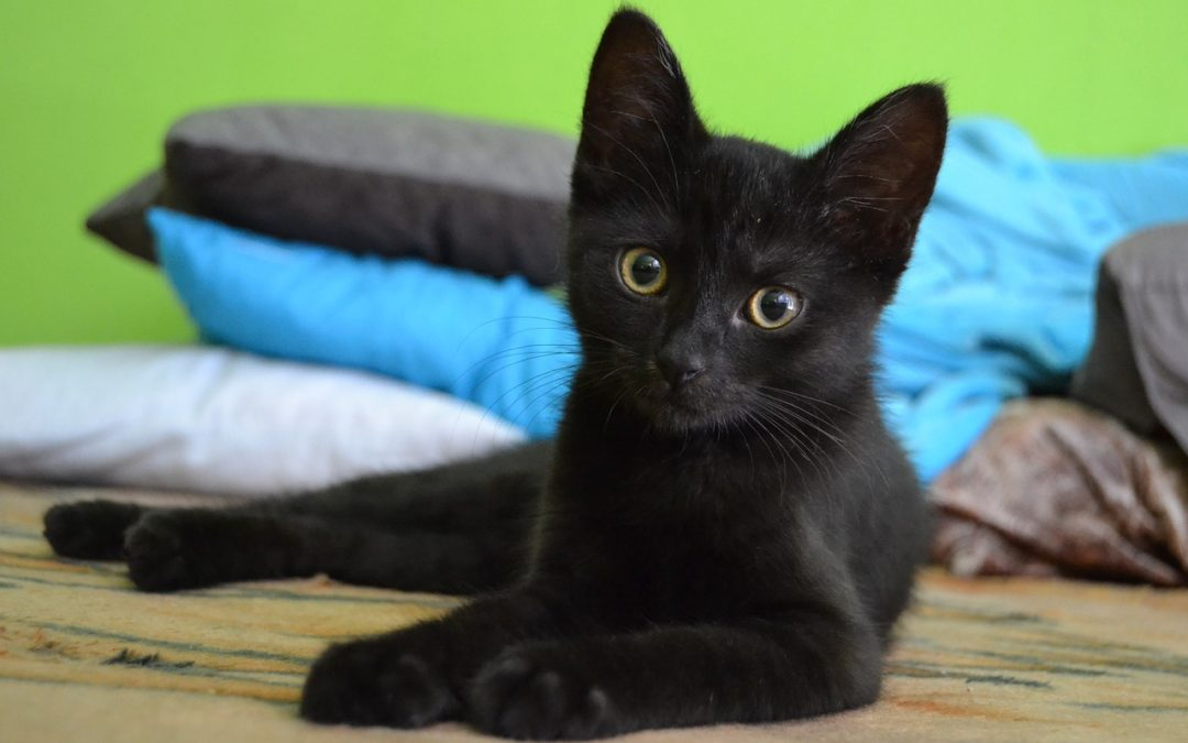 October 27th Is National Black Cat Day!