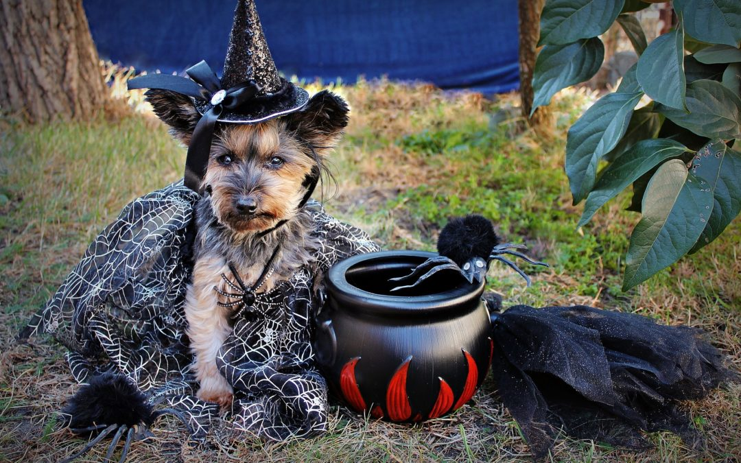 Don't Be Scared: How to Keep Pets Safe on Halloween